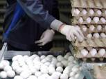 گلستان ما - کشف 307 تن تخم مرغ احتکاری به ارزش بیش از 5 میلیارد تومان در گنبدکاووس
