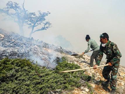 گلستان ما - آتش سوزی در جنگلهای درازنو
